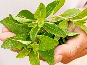 Organic Stevia: Your Next Healthy Diet Addition