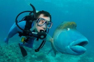 Expand Your Verticals: A Few Great Reasons to Explore Australia's Underwater Worlds