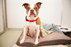 Reasons to Hire Professionals for Your Pet's Relocation