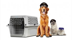 Reasons to Put Your Trust in the Hands of Pros if You Need Pet Relocation