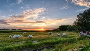 Reasons to Use a Solar Powered Electric Fence on Your Property