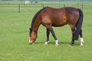 Horse Care: The Reasons to Use Standing Wraps