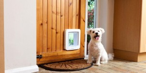 Reasons to Install a Dog Door
