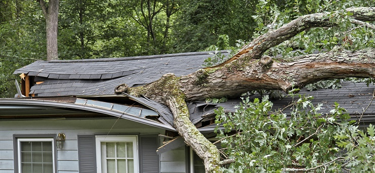 residential tree services 2
