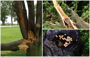 Exploring the Most Common Reasons for Tree Removal