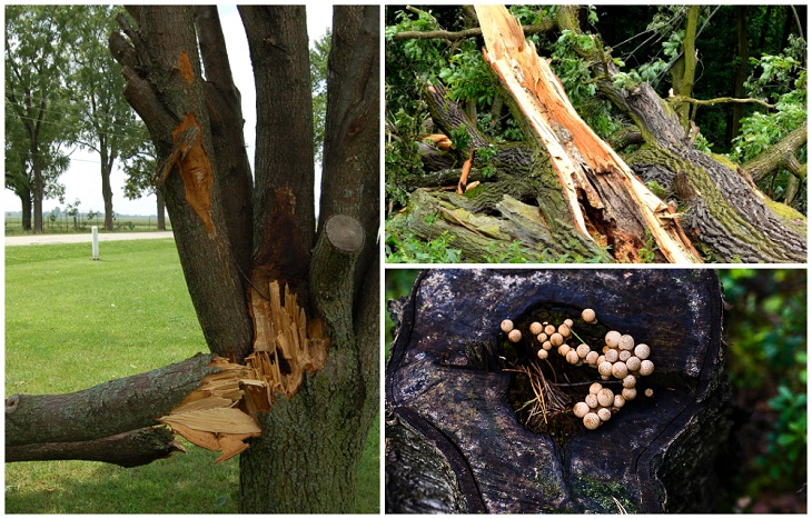 residential tree services
