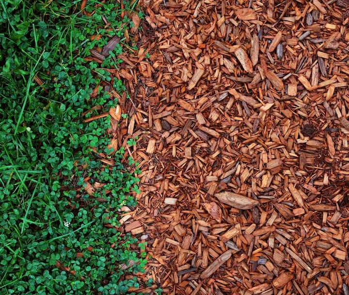 mulch and green grass