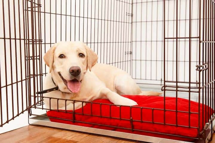 dog laying inside his cage