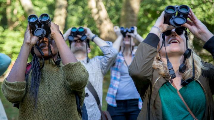watching-with-binoculars