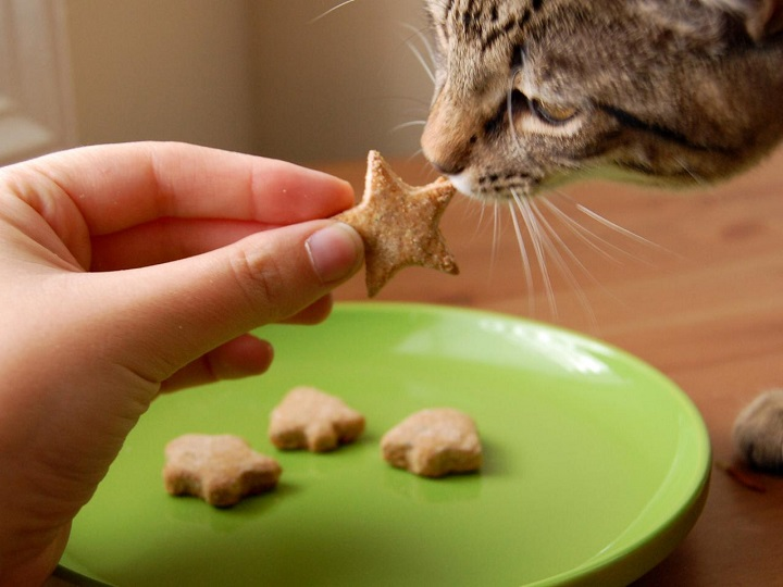 person giving star-like treat to cat